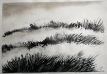 Duinen landschap